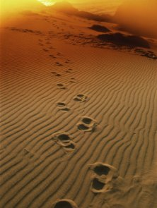 Footprints-In-The-Sand1